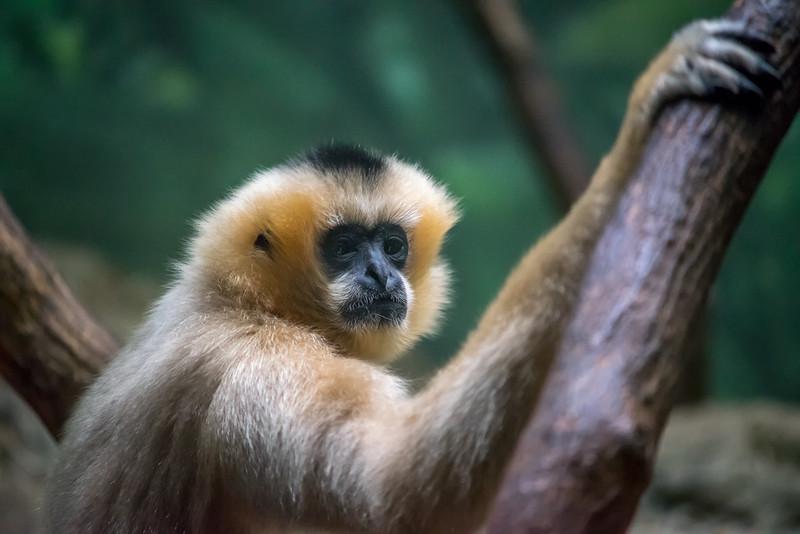 Primate Pose