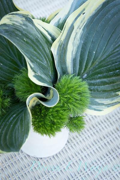Hosta - Dianthus arrangement_2190.jpg