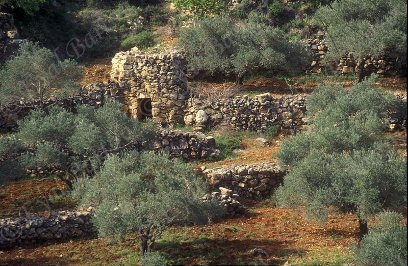 Yehuda 09.jpg