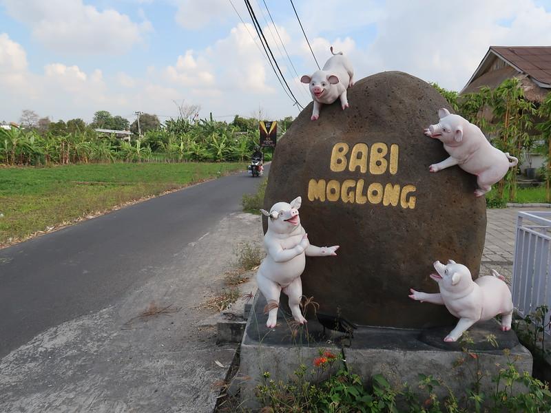IMG_4577-babi-moglong-pigs.JPG