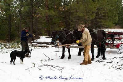 Work horses in the Bitterroot
