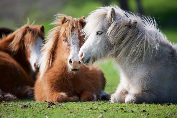 Sami's Lil Horse Ranch