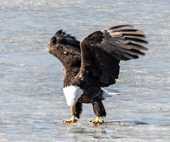 03-17-2020-eagles-6.jpg