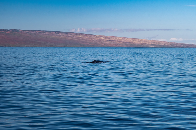 We probably had 10 different whale sightings on this dolphin tour :)