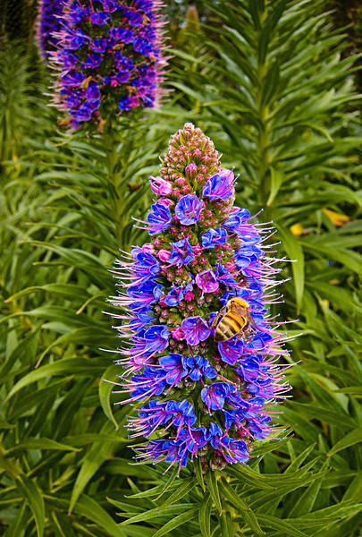 San Diego Botanic 10.jpg