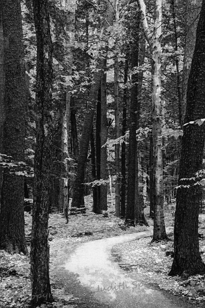 Into the Woods - Judith Sparhawk