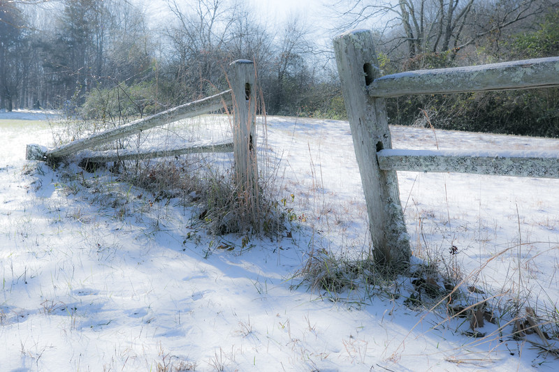 January Snow-15.jpg