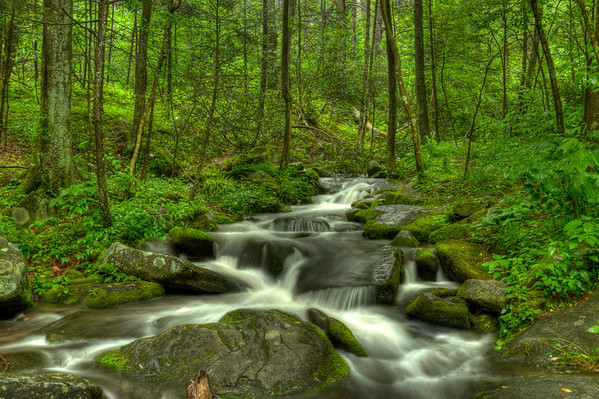 Forest and Streams