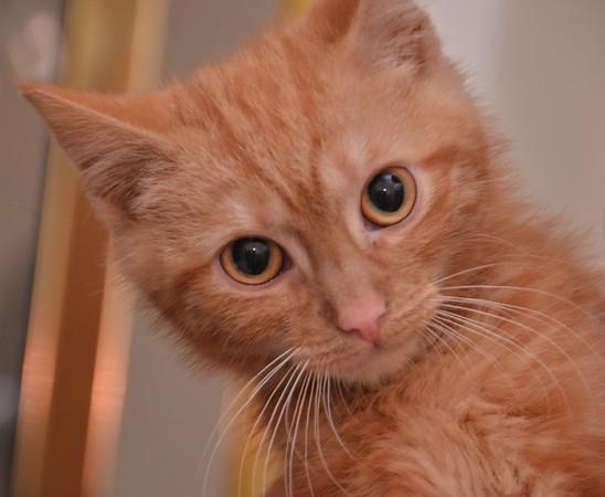 Odd Cat Sanctuary - Virgo