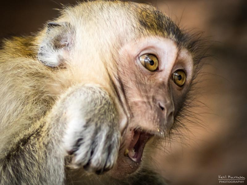 2017-12-22 Monkeys-4.jpg