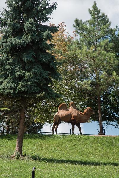 Syracuse Zoo August 2020-18.jpg