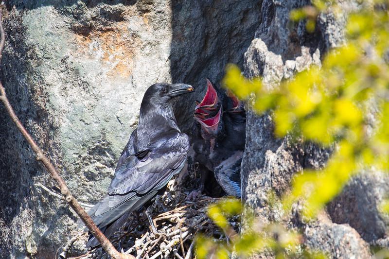 Ravens Nest-8144.jpg