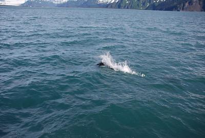 Alaska 6-22-2012_Whales & Glaciers