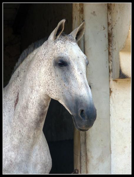 2010 FR Provence 026.jpg