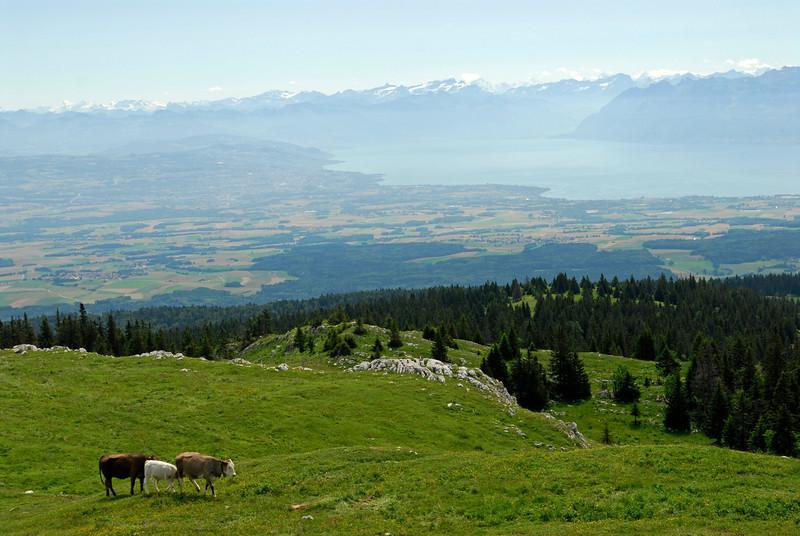 070626 7288 Switzerland - Geneva - Downtown Hiking Nyon David _E _L ~E ~L.JPG