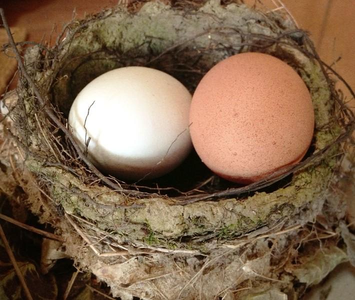 Birds in The Basket.