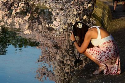 Cherry Blossoms 2013 - The Photographers