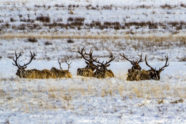 Teton Animal Slideshow