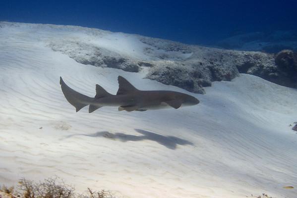 Bob's Shark - Video