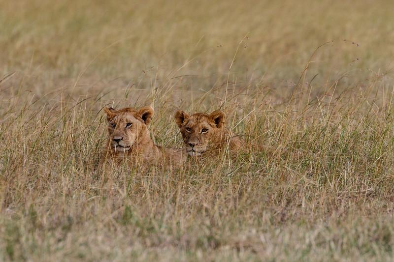 Kenya 2015-06105.jpg