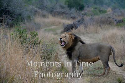 Botswana and South Africa animals