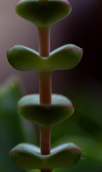 Succulent D90 042020-7181.jpg