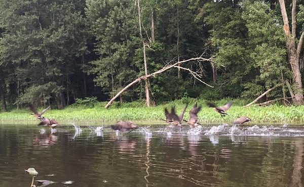 Best of Wallkill River Nat'l Wildlife Refuge