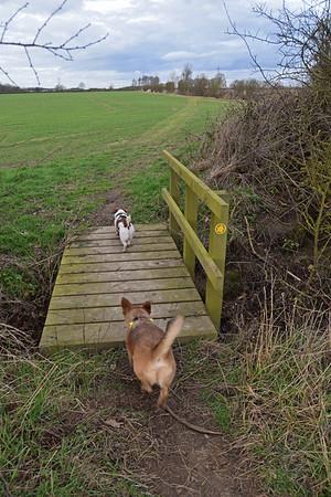 AUBOURN DOG WALK