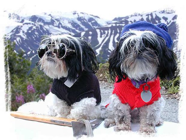 620_mountain_dogs.jpg