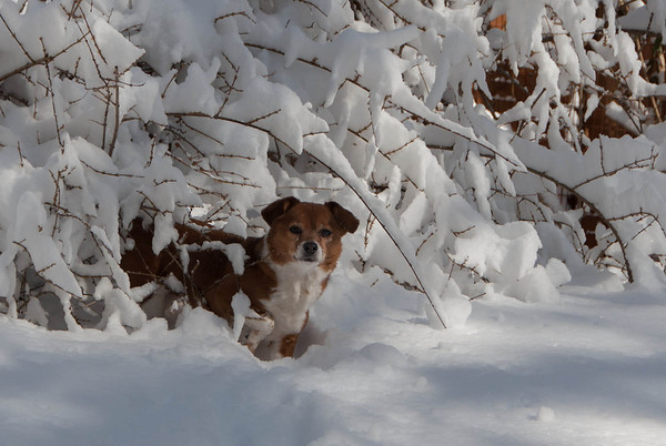2014-02-04 Rags in the Snow