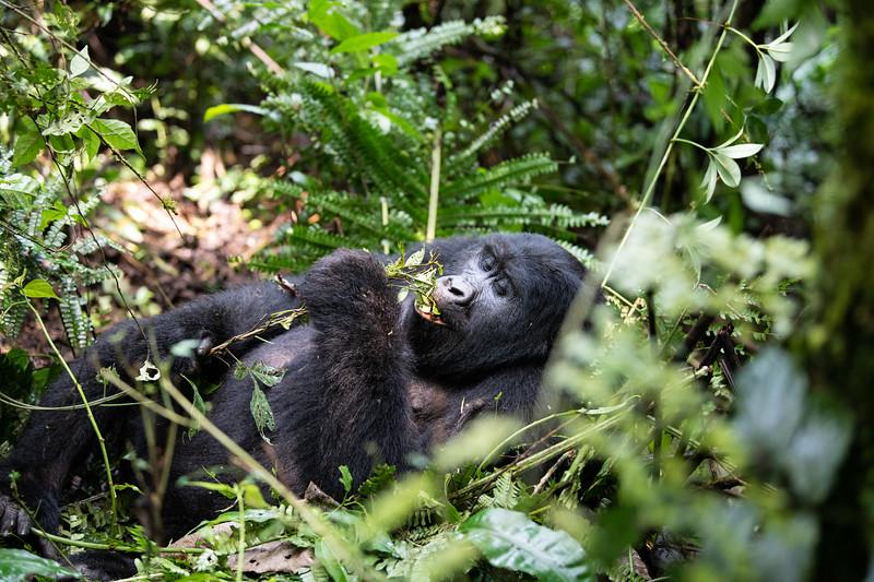 Uganda_T_Gor-181.jpg