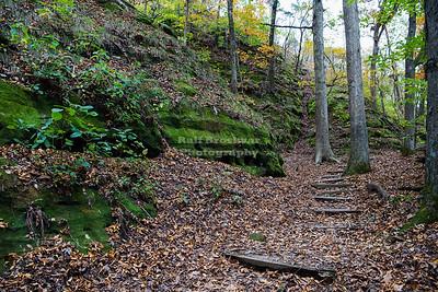 USA, IL - Ferne Clyffe State Park