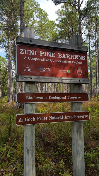 Blackwater Ecological Preserve Zuni Pine Barrens