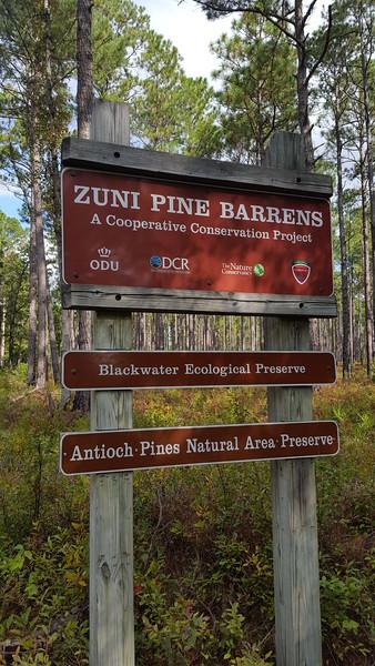 Blackwater Ecological Preserve Zuni Pine Barrens
