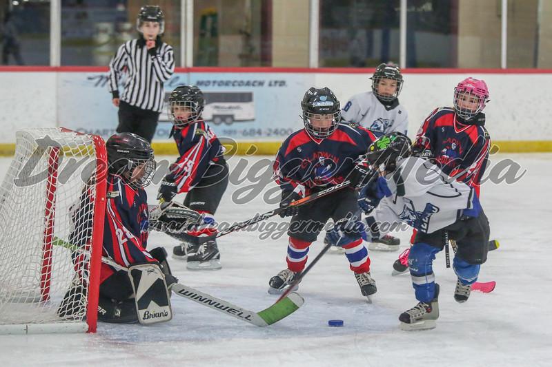 Blizzard Hockey 111719 7542.jpg