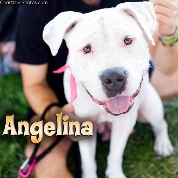 Adopt Angelina at www.WagsAndWalks.org!