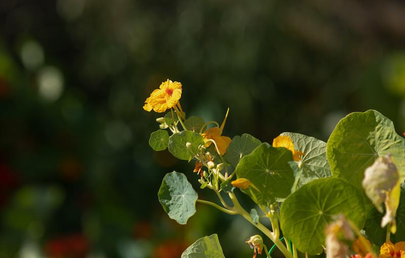 flower-9843.jpg