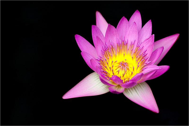 20110926_Flower_4.jpg