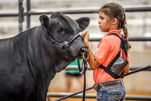 Bred & Owned Bull Show