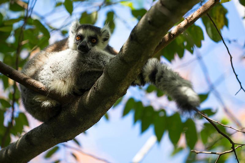 Madagascar_2013_FH0T1288.jpg
