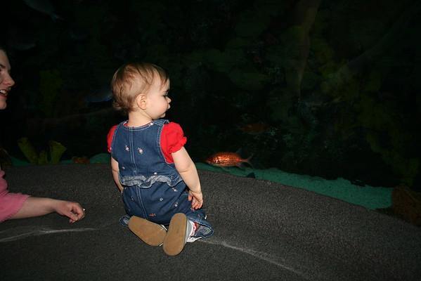 Chattanooga TN Aquarium 02-28-08
