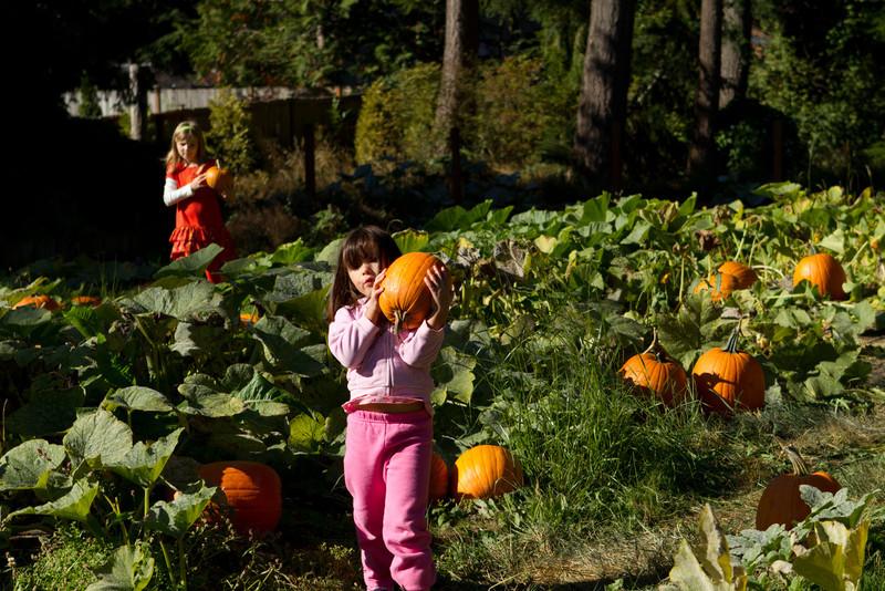 PumpkinPatch2012-211.jpg