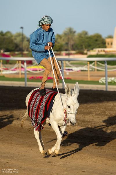 IMGL0755- Horse show.jpg