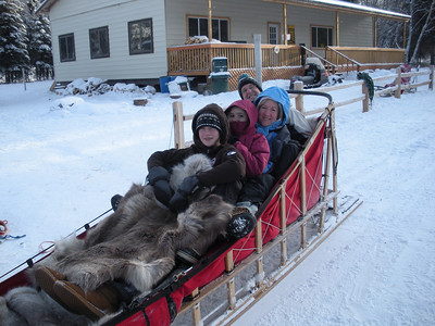 Dogs and Dog Sledding