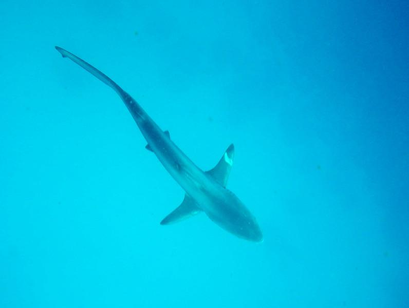 underwater-89.jpg
