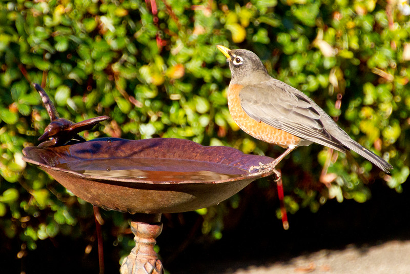 Backyard_Birds-Mar2012-22.jpg