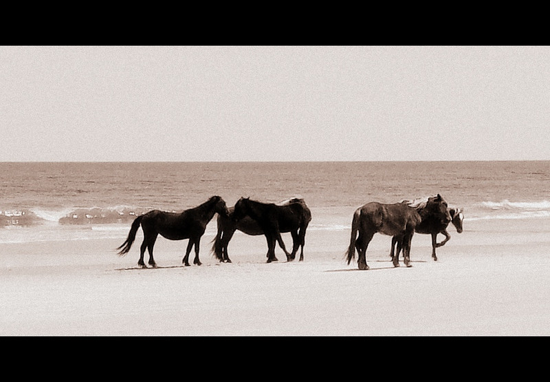 Outer Banks Corolla (160).jpg