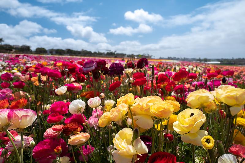 Spring Flowers A-192.jpg