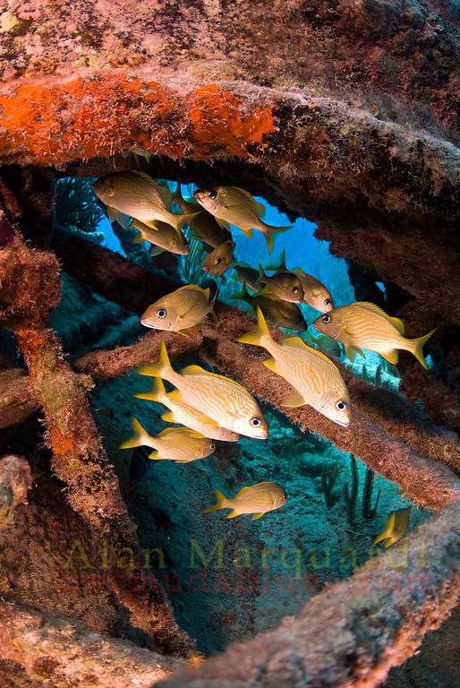 Bermuda Wreck diving