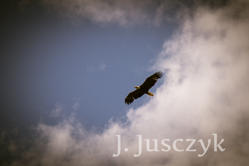 Jusczyk2021-6839.jpg